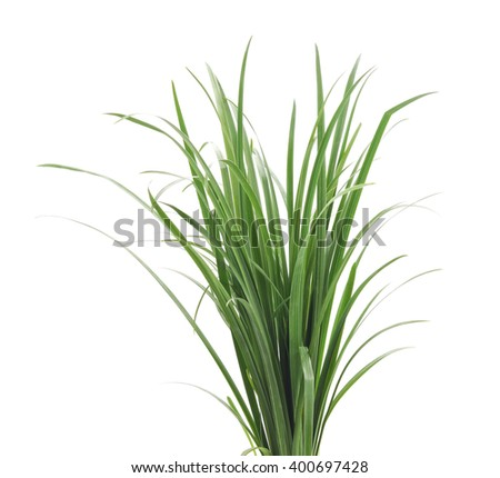 A bunch of green grass isolated on a white background. #400697428