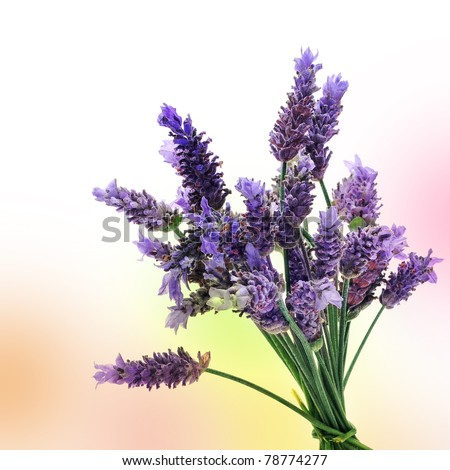 a bunch of lavender flowers on a colorful background