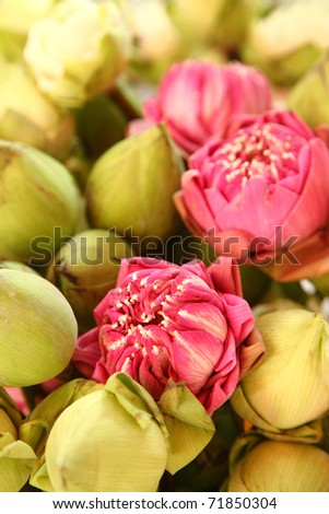 A bunch of Lotus flowers for Buddhist prayer