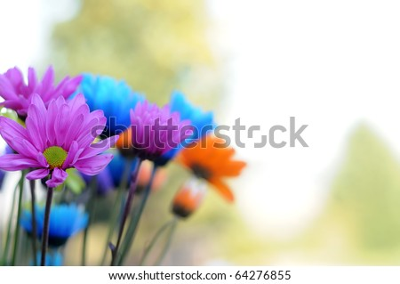 A bunch of multicolored daisy flowers standing up inside a vase. This image makes a good background.