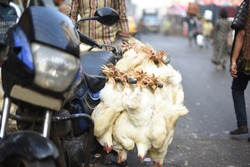 A bunch of poultry chicken are attached to the handle of a motorbike for sell in the street. Indian market