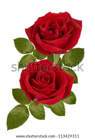 stock photo : A bunch of red roses