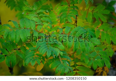 A bunch of saturated leaves with a hazy, yellow background #1208350150