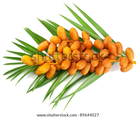A bunch of yellow raw dates with palm leaf on white