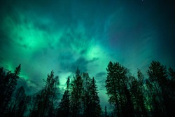 A burst of the northern lights through the trees