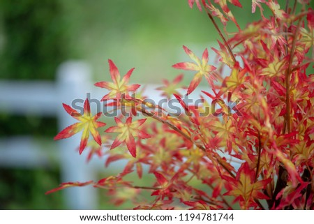 Free Photos Red Maple Bush In A Garden Maple Bush Avopixcom