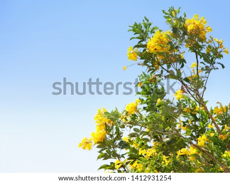 A Bush of yellow tropical flowers against blue sky in summer outdoor. #1412931254