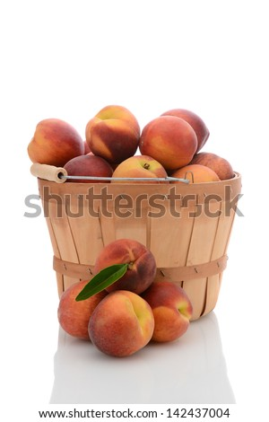 A bushel basket full of fresh picked yellow peaches, with a stack of loose fruit in front. Vertical format isolated on white with reflection.