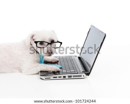 A business, educational or smart shopper dog using the computer or internet or extranet,