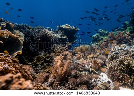 A busy reef is a healthy reef. #1406830640