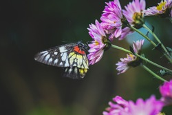 A butterfly collects nectar on the flower