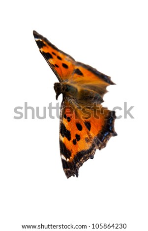 A butterfly, isolated on white background - stock photo