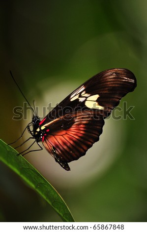a butterfly laying on a leaf in front of a nice bokeh