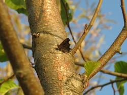 a butterfly sits on a tree trunk on a bright autumn day
