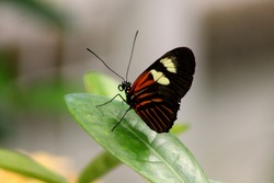 A butterfly standing on a leaf