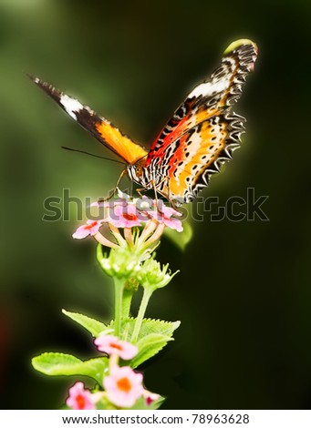 A butterfly stays on a flower