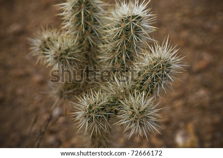 A Cactus (Plural: Cacti, Cactuses Or Cactus) Is A Member Of The ...
