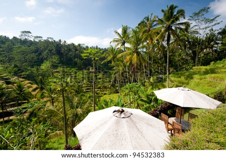 A cafe in Ubud overlooking the Rice Terraces, - Bali