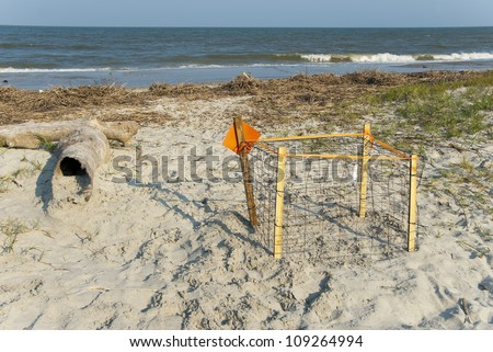 A caged and protected, freshly laid, loggerhead turtle nest.