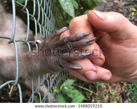 A caged monkey giving her hand to a human outside the cage  #1488029210