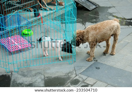 A caged pet pig being sniffed by a dog.