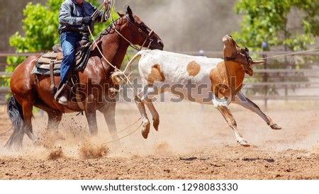 A calf being roped by a cowboy riding a horse during a team event at a country rodeo #1298083330