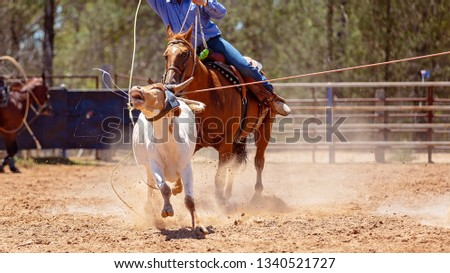 A calf being roped by a cowboy riding a horse during a team event at an Australian country rodeo #1340521727