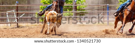 A calf being roped by a cowboy riding a horse during a team event at an Australian country rodeo #1340521730