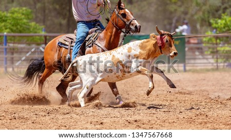 A calf being roped by a cowboy riding a horse during a team event at an Australian country rodeo #1347567668