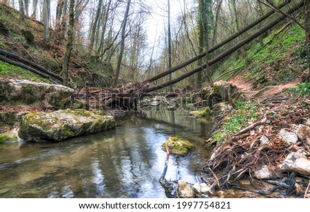 A calm river in the middle of the forest. Forest river view. River in forest. Calm river in forest