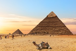 A camel by the Pyramids of Egypt, Giza