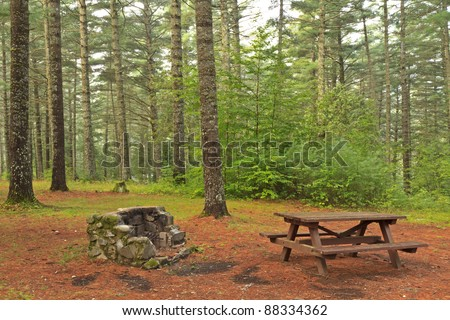 A campsite in an old growth forest of yellow pines at Sharp Bridge Campground in the Adirondack Park in New York