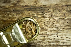 A can with fishing bait, some honey worms on wooden background, copy space
