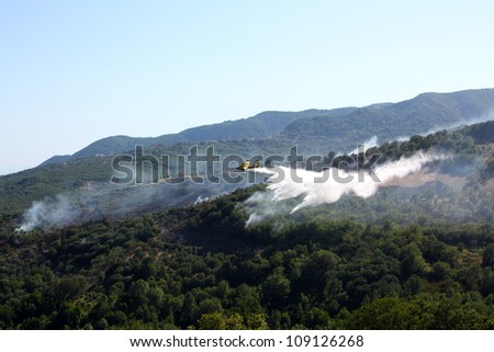 A canadair airplane extinguish forest in flame