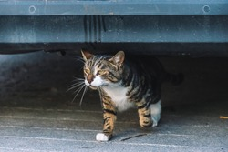 A candid shot of a cat walking from under a car under a car in a French village
