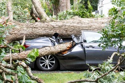 A car in the driveway has a tree fall on top of it and crush it during a summer storm in Babylon New York.