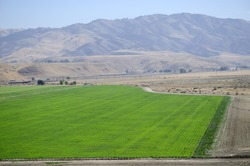 A carrot field in Central California in the foothills of the Southern Sierra Nevada Range