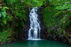 A cascade in the tropical forest of Basse Terre, Guadeloupe
