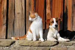 A Cat and a Dog in the little farm of Prat le, Italy