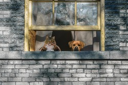 A cat and a dog looking out a window set in a brick wall.
