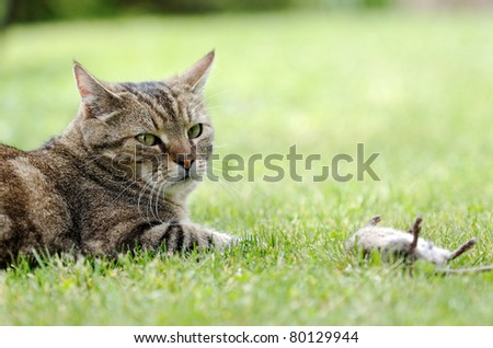 a cat and its prey