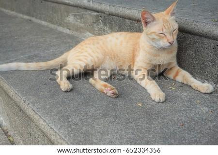 A cat Closes eye #652334356