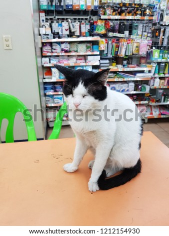 a cat dozing on a convenience store table