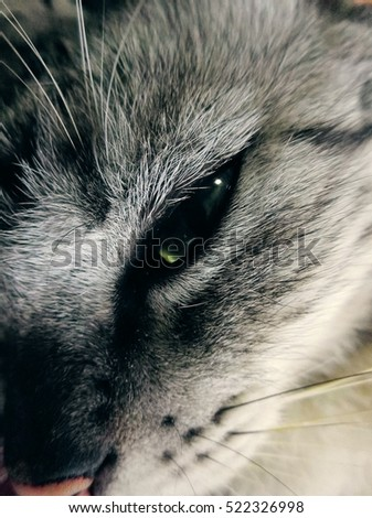 A cat eyes ,in the sleepy moment when some people going to disturb them. #522326998