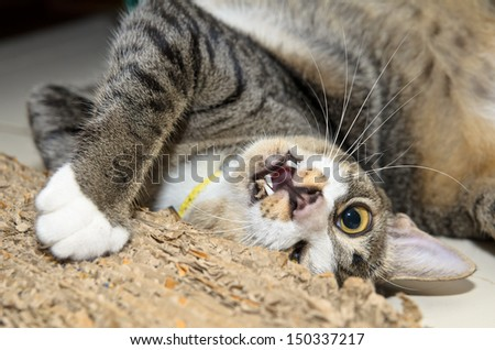 A cat happily scratching or playing with a cat scratcher