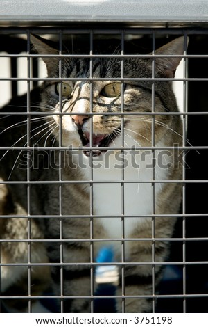 Cat In Cage. stock photo : A cat in a cage