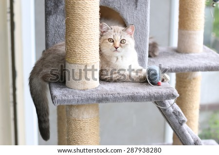 A cat is playing with toy on cat house