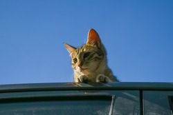 A cat is relaxing on car roof during winter season.