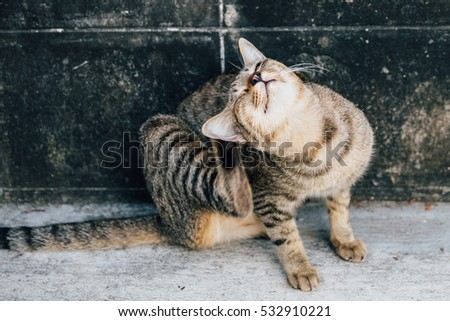 A Cat is scratching itself #532910221