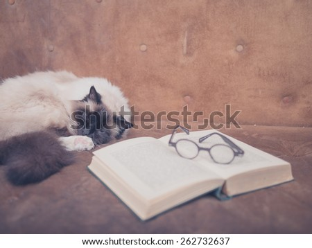 A cat is studying an open book and a pair of glasses on a sofa